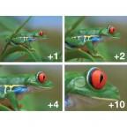 Kit de Filtros Macro Close Up (+1,+2,+4,+10) para Nikon P520  P510